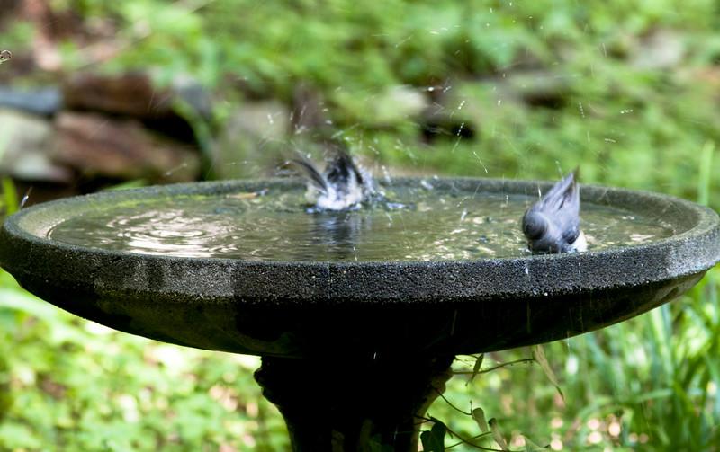 2015-06-20-bathing
