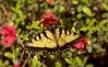 2016-04-03-Butterfly