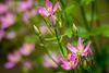 2017_07_15_wildflower_1