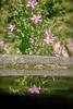 2017_07_15_wildflower_4
