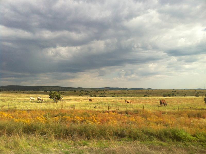 Somewhere between Vegas and Flagstaff