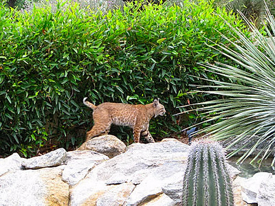This is a shot of Larry & Carol's pet cat.<br /> Here kitty,kitty.<br /> This photo and the following are from Larry & Carol.