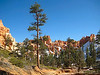 Photo By Henrik Arp - Down In Bryce Canyon