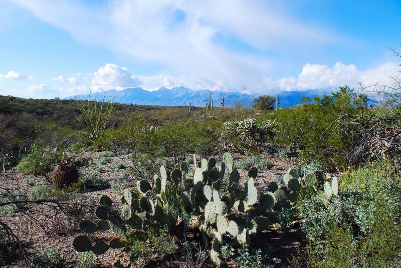Saquaro National Park - West