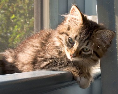 Abby in the window. She had an upper respiratory infection when we adopted her, and was still in isolation when this was taken.