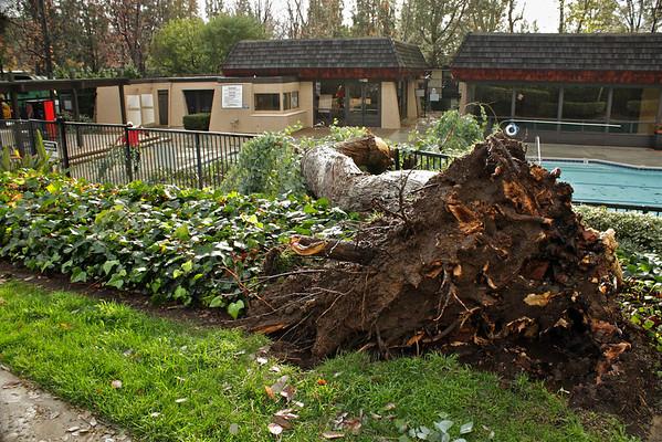 Tree down in Tanglewood Pool!