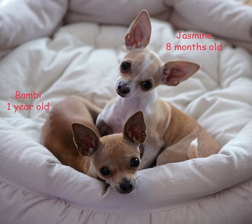( SOLD PHOTO GALLERY ) * Pictures our customers have sent us with their pets part 1 *