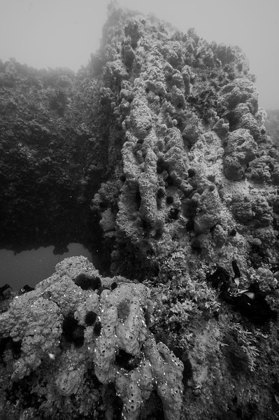 Gnarled gray moon sponge drapes the pylons since the pipe was laid in 1951.  Hyperion 1-mile elevated pipe.