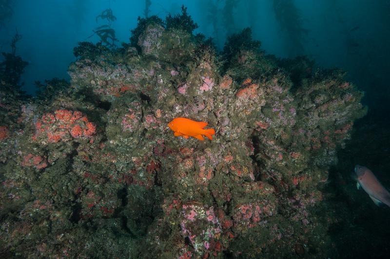 Resort Point Reef, Palos Verdes, California