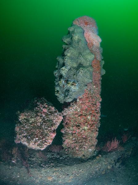 Spongehenge<br /> Hermosa Beach Artificial Reef, Los Angeles County, California