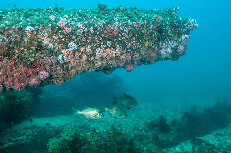 Overhang north of the fishbowl.  <br /> Hermosa Beach Artificial Reef System, California