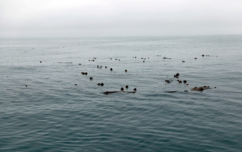 2016-08-15<br /> Hunt Rock, Gordon Channel, British Columbia<br /> A unique dive site