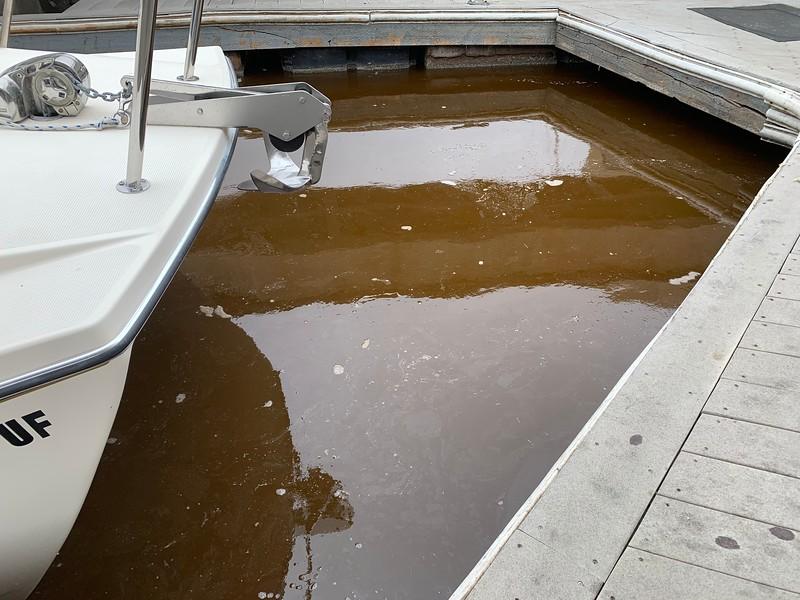 Phytoplankton at the boatyard