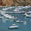 C-brats get together at Catalina Island