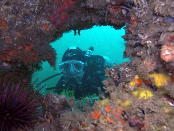 2009-08-02<br /> Ted's Pinnacle at Marineland, Palos Verdes, California<br /> Dive #241