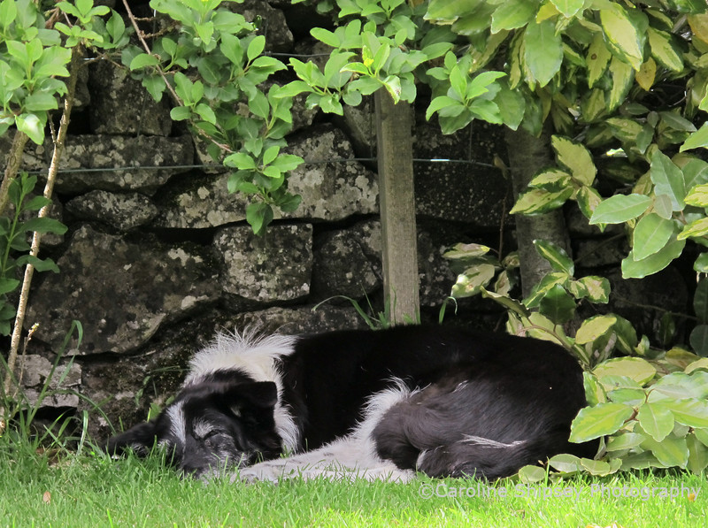 Sleeping in the garden in a favourite place waiting for David to come - peaceful and comfortable, her last photo.