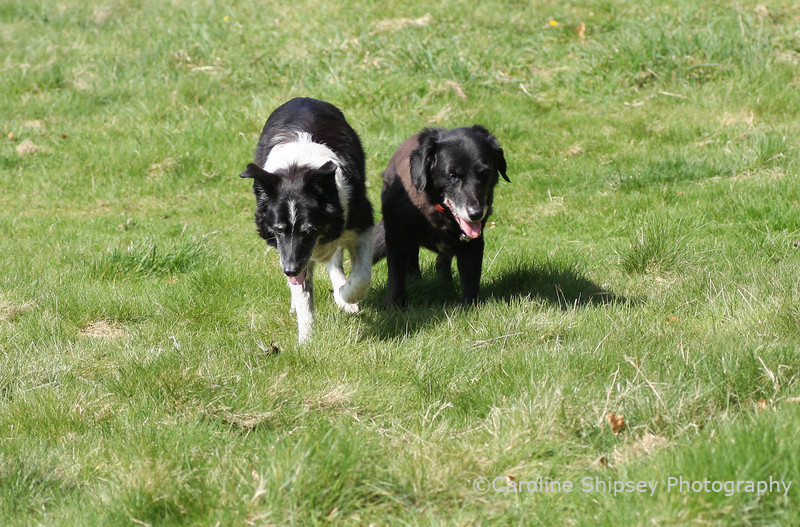 Two old ladies - both feeling weary.  Bessie has a problem with her back left leg/hip and Dusty is still not benefiting from the medication to treat hypothyroidism.   I fee very sad to see them like this, hopefully tomorrow will be a better day.