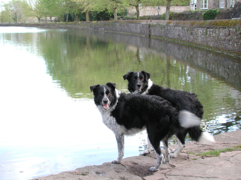 Bessie and Fly at the Moat