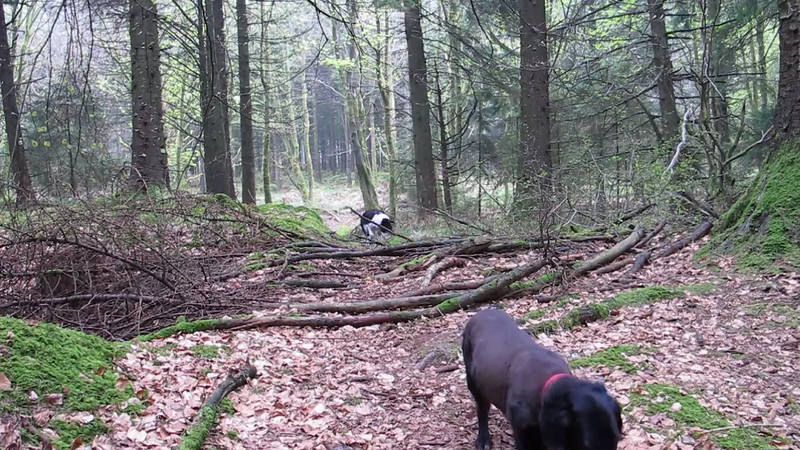 This short video clip shows that despite their age both Bessie and Dusty are still quite nimble.