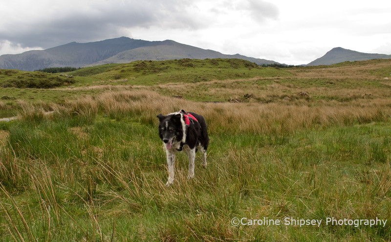 """We had walked around Llyn Dwyarchen.  <a href=""""http://www.carolineshipsey.co.uk/Places/Wales/7342134_Q2PDZ#1292368794_r9JggD6"""">Llyn Dywarchen</a> is a mystical place, located at the base of Snowdon and surrounded by stunning scenery. The lake is famous for its 'floating island' and offers good fishing that is easily accessible from Beddgelert."""