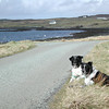 Bessie and Fly on Skye