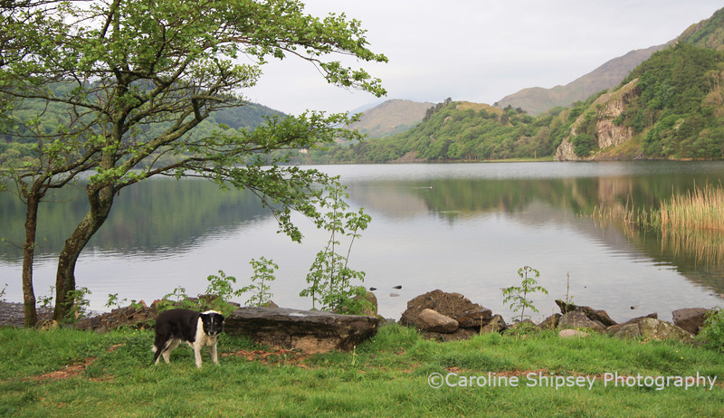 Bessie always likes to be near water so the camp site at Llyn Gwynant was perfect for her - this was the view from the camper van.