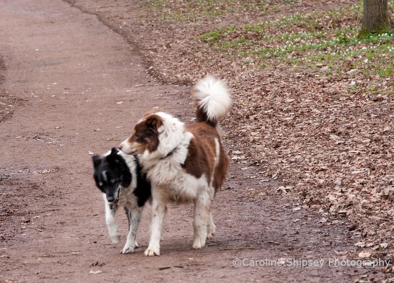 Bessie's new found friend being very persistent!