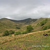 Cwm Pennant looking towards Snowdon, just a hint of bluebells showing in the foreground.