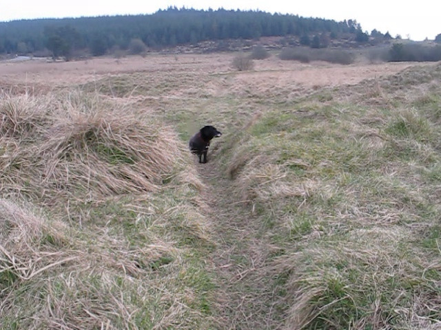 I've included this clip because it shows Dusty being very slow  and plodding while Bessie comes along the path in the distance at quite a decent pace.