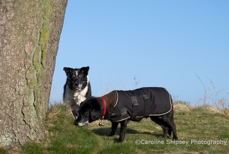 23rd March <br /> Stopping for a good sniff at the big tree on the mound above the pool.
