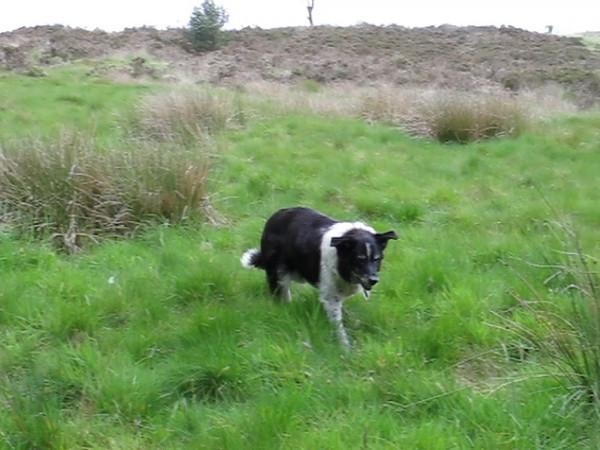 Bessie's last walk