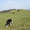 27th March<br /> A beautiful sunny Sunday afternoon walking up Ashen Hill Barrows, Priddy.  Bessie is bringing up the rear, mainly because she likes to walk with me.