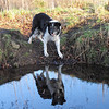 18th March 2011 - Fair Lady's Well - favorite place of Bessie, she has always loved water, though now only for a drink or paddle, and never misses the opportunity to stop here as we pass by.<br /> <br /> Today has been good, 3 walks a total distance of about 2 miles.<br /> <br /> Food today - 1 slice of cooked Ox tongue, 1 raw egg, 2 or 3 Schmackos, about 10gms of my fish supper,  small amount of chicken liver fried with a little potato, 3 dried sausages, 4 sausage roll biscuits at bedtime.  This is the most she's eaten for several days!