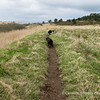 27th March pm - walk no.3<br /> Heading towards the pond from Shepton Hut.