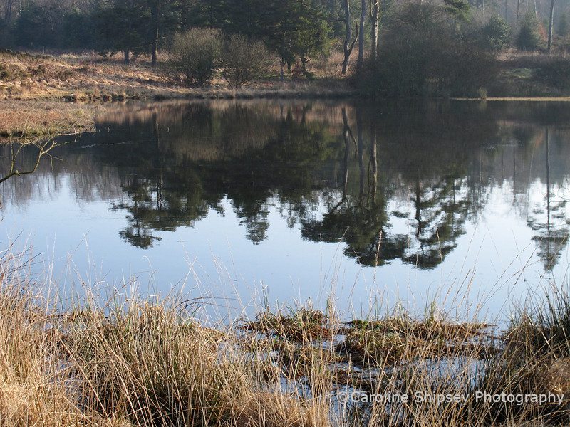 23rd March<br /> A beautiful morning for walking dogs at Priddy Pool (official name Waldegrave Pool but no-one who is really local calls it that, and yes we do know where the 'other' Priddy Pool is!)