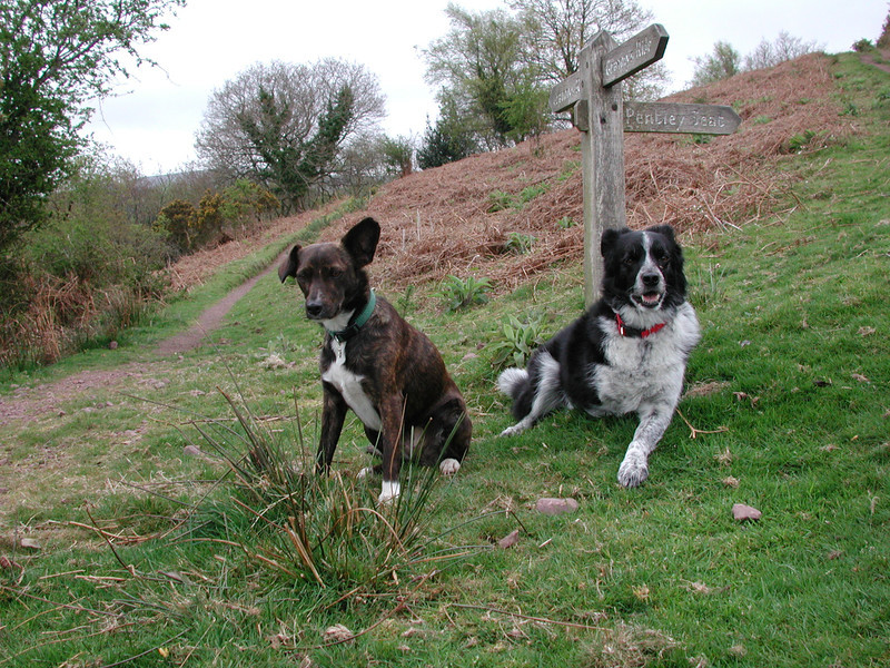 Chipper and Fly go to Exmoor
