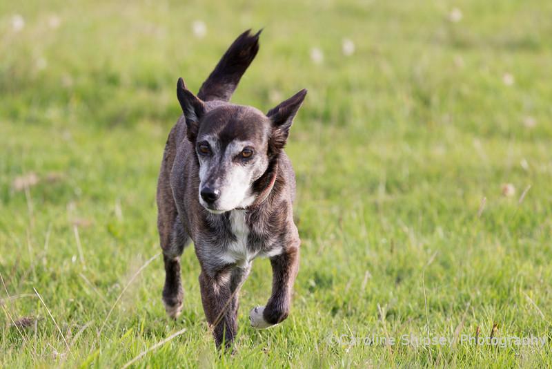 Chipper, little old lady enjoying her walk