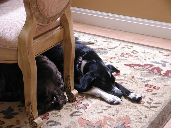 Daisy/Suzy together