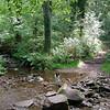 Bessie in Cloutsham/Horner Wood area