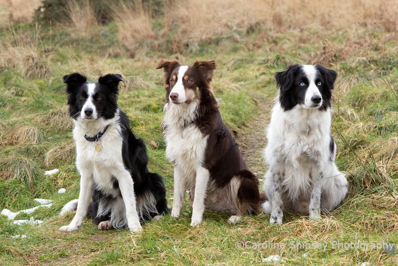 Rosie,Oscar and Blue