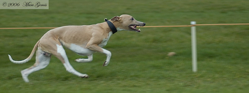 Bowie during his 350m run
