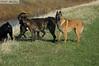Dixie, Max, Goshi & Ginger