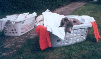 Dog laundry