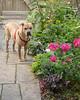 Pei in a Summer Garden