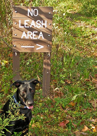 The no leash area at Mingo Creek County Park, Washington County PA.  A favorite destination.