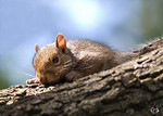 Squirrels and Other Wildlife : These well be rotated out, so check back often.