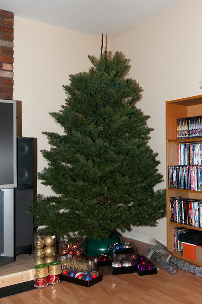 This photo was taken the day after we bought our tree.  I believe we bought our tree at the end of November / start of December.  We took great care of the tree and it was still green and healthy at the end of January.