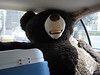 Theodore (aka Teddy) is strapped in and ready for the drive to his new home in Valencia!