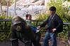 2008-01-12 - San Diego Zoo - Kylie and Gorilla Statue - _DSC1486