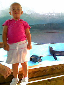 Sydney and the Sea Lions at Gulf World  - camera phone
